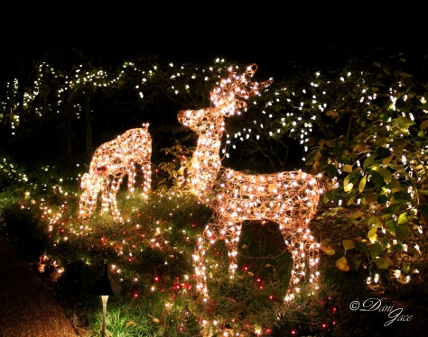Lighted Reindeer