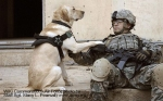 640px-Iraq_dog