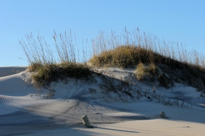 Coquina Dune